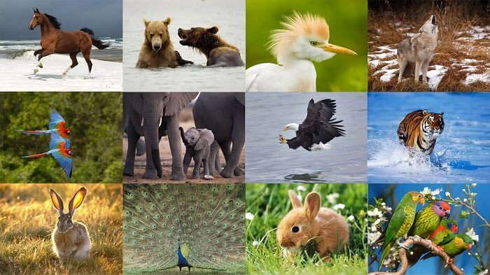 Zooloji (Hayvan Bilimi) ve Dalları