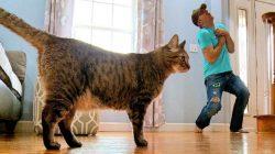 Kedi ve Köpekler Sahibinin Ölümüne Nasıl Tepki Verir?