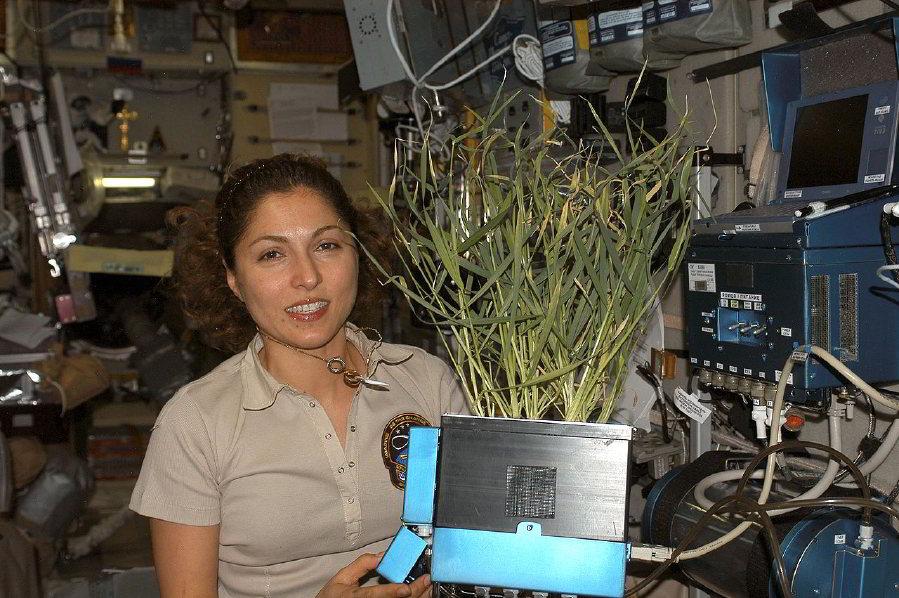 Ansari, Uluslararası Uzay İstasyonu'nun Zvezda Hizmet Modülünde yetiştirilen bir bitkiyi elinde tutuyor.