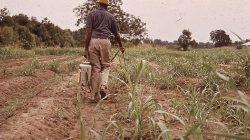 Pestisit Nedir? İnsanlar ve Hayvanlar Üzerindeki Olumsuz Etkileri Nelerdir?