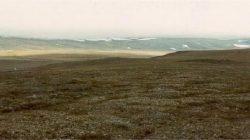 Tundra Nedir?
