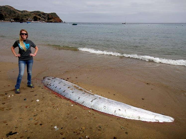 Deniz Canavarı Masallarının İlham Kaynağı: Kürekbalığı