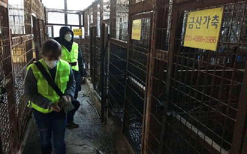 Her Yıl Bir Milyon Köpeğin Yenmek İçin Kesildiği Mezbaha Kapatıldı