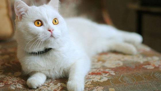 İslamda Kedi Beslemek