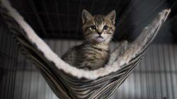 Kediniz Gece Sizi Uyutmuyorsa Ne Yapmalısınız?