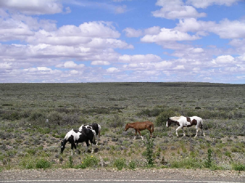 Arjantin pampalarının (bozkır) tipik manzarası