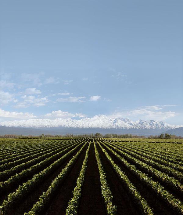 Arjantin'de tarım nispeten tüm istihdamın yaklaşık% 7'sini sağlıyor.