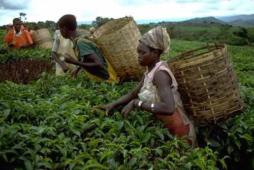 Benin Tarımı