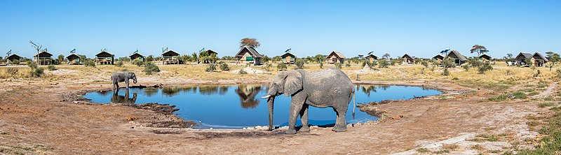 Afrika savana filleri
