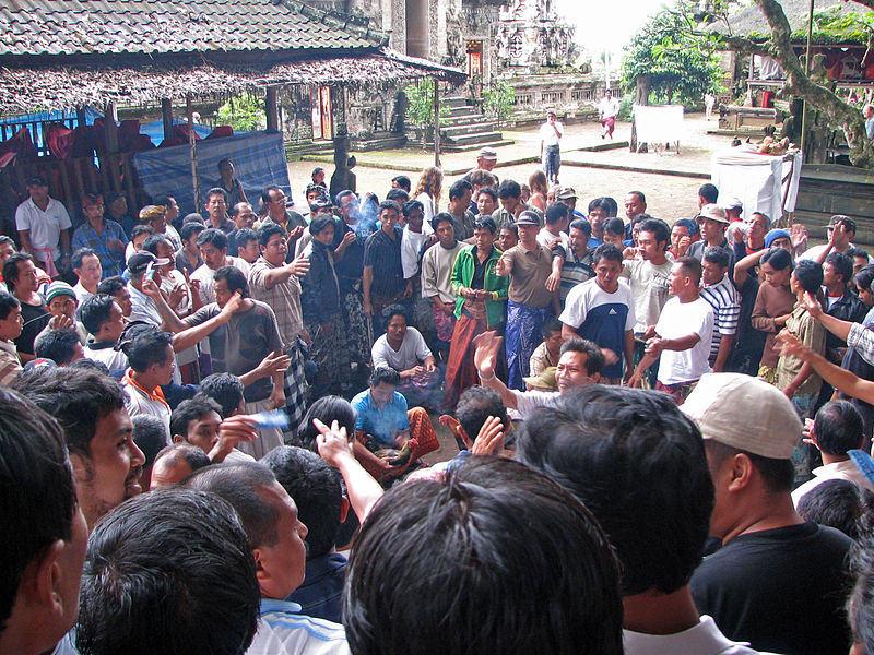 Horoz dövüşü, Bali