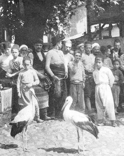 Gurabahane-i Laklakan (Düşkün Leylek Evi) – Dünyanın İlk Hayvan Hastanesi