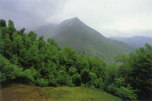 Mazenderan Eyaleti'nde ormanlık tepeler