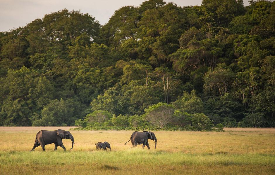 Gabon Coğrafyası ve iklimi