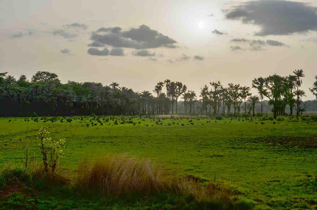Gine Bissau  İklim
