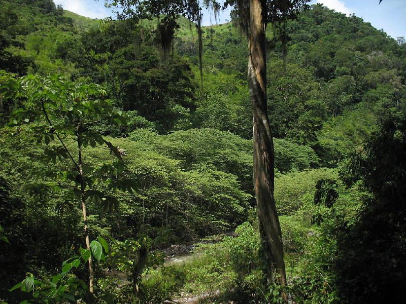 Honduras yağmur ormanları