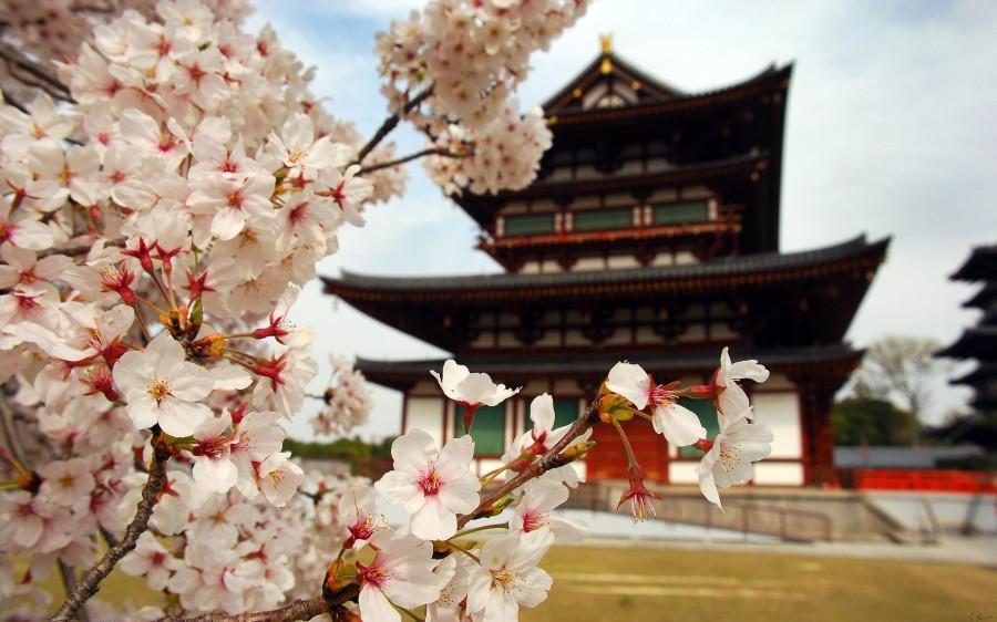Sakura – Kiraz çiçeği