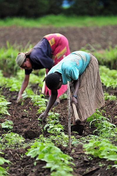 Kuzey Kivu'da tarım işçileri