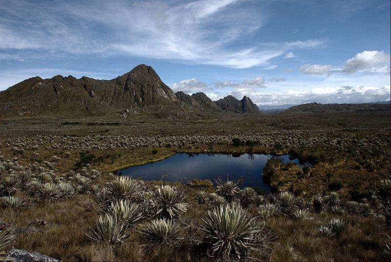 Sumapaz alpin çayırı, And Dağları.