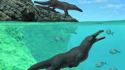 Yürüyen Ve Yüzebilen Dört Bacaklı Balina Fosili Bulundu