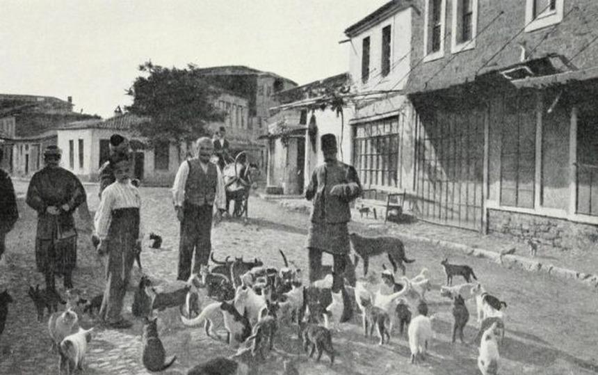 Hayırsız Ada (Sivriada) Köpek Katliamı - 1910