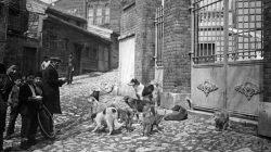 Hayırsız Ada (Sivriada) Köpek Katliamı – 1910
