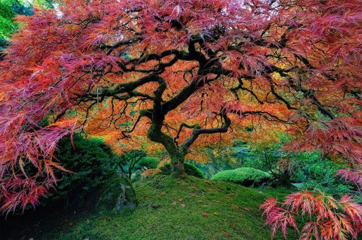 Akça Ağaç