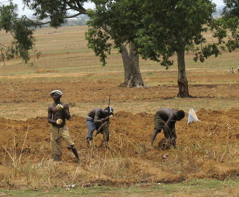 Nijerya'da çiftçiler