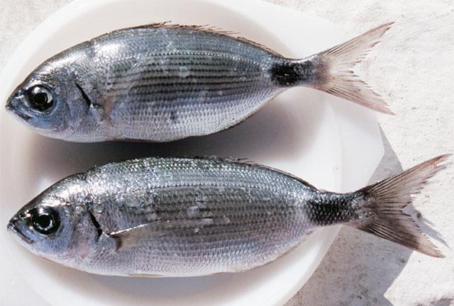 Olta İle Balık Avlama Teknikleri