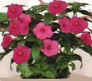 İçmekan Çiçekleri Yetiştirme ve Bakımı