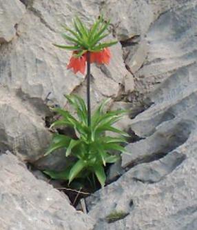 Türkiye'de Nesli Tükenmekte Olan Bitkiler