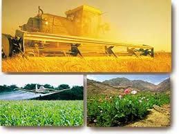 Organik Tarımın Nedenleri