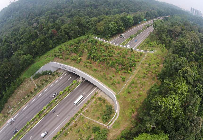 Yaban Hayatı Geçidi (Ekolojik Köprü)