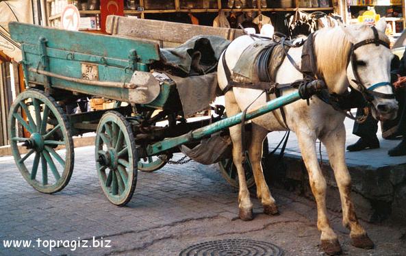 At arabaları