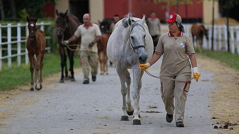 Atlara Fısıldayan Kadınlar