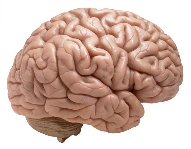Beyin nedir?