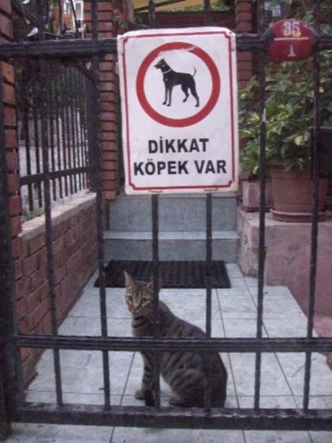 Dikkat Köpek Var !!!