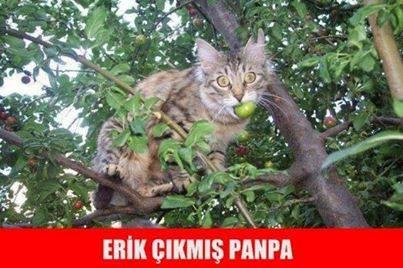 Erik Çıkmış