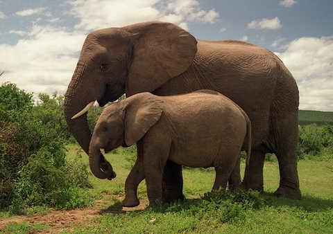 Filler Köpeklerden Daha İyi Koku Alıyor