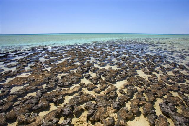 Stromatolitler (Shark Bay – Avustralya)