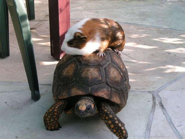 """Hayvanlar Aleminde """"Toplu Taşıma"""""""