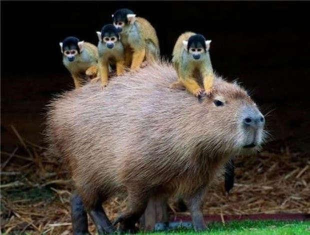 "Hayvanlar Aleminde ""Toplu Ta��ma"""