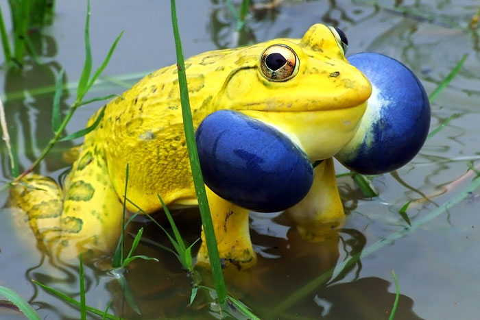 S�rad��� Tuhaf Renkli Hayvanlar