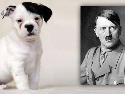 Hitler'e Benzetilen Köpek