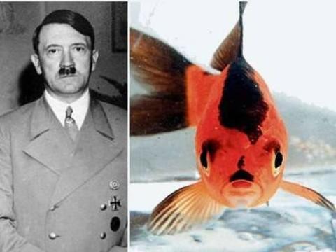 Hitler'e Benzetilen Bir Balık