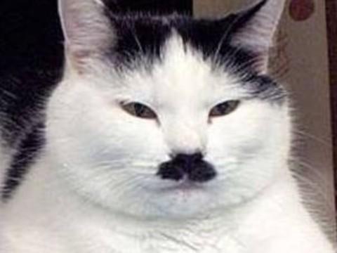 Hitler'e Benzetilen Bir Kedi
