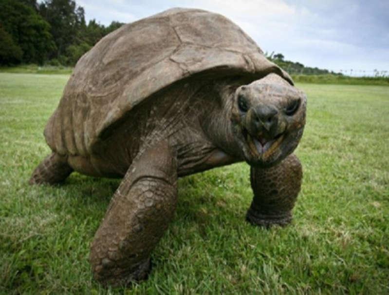 Kaplumbağa Jonathan