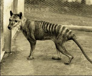 Nesli T�kenen Hayvanlar (T�rkiye'de ve D�nya'da)
