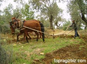 Eski Tarım Aletleri Kullanım Alanları ve Resimleri