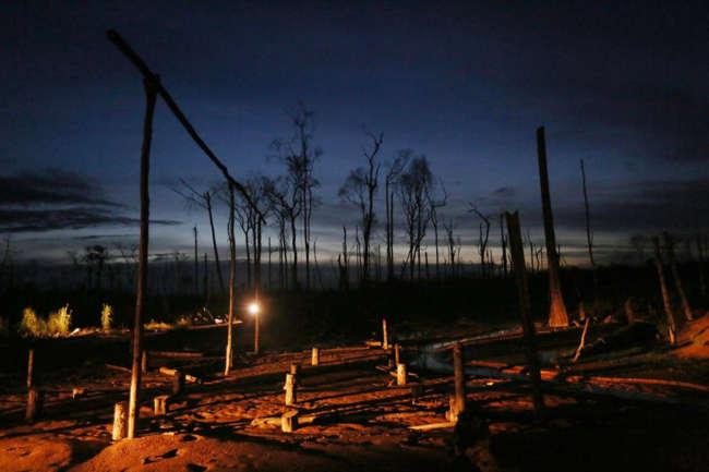 Peru, Latin Amerika'daki en büyük altın üreticisi. Bir zamanlar Amazon ovasındaki Madre de Dios bölgesini kaplayan capcanlı ormandan geriye kalan tek şey, maden şirketlerinin arkalarında bıraktığı ağaç kökleri.
