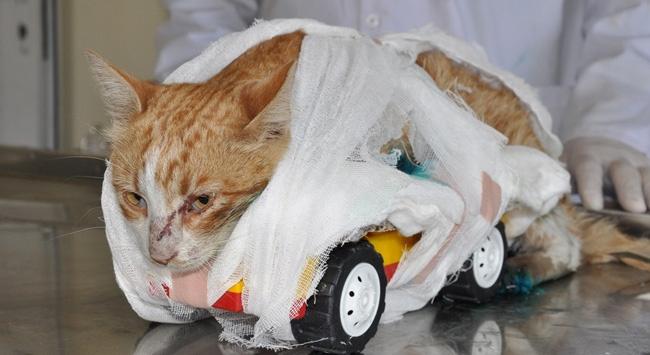 Kedinin Ayaklarını Kesip Ölüme Terk Ettiler
